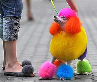 dyed dog